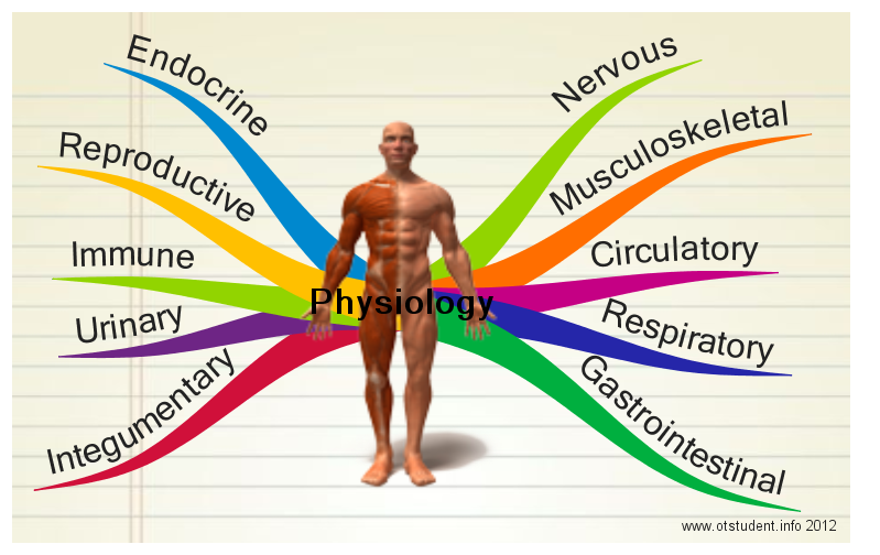Physiology body explosion chart