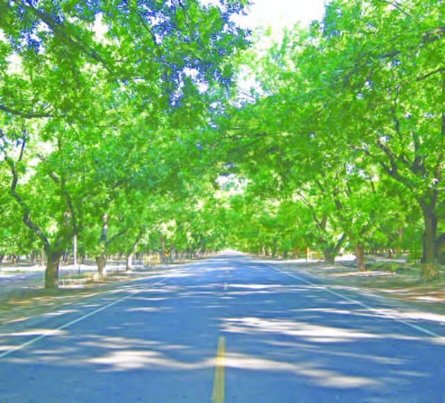 Stahman Pecan Farm road