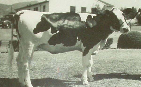 Holstein at La Tuna prison