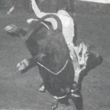 Bull twisting rider in rodeo