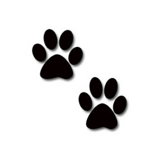 picture of two dog paw prints
