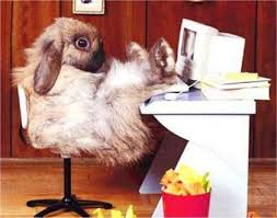 fluffy bunny, relaxed,  with his feet up on a computer desk