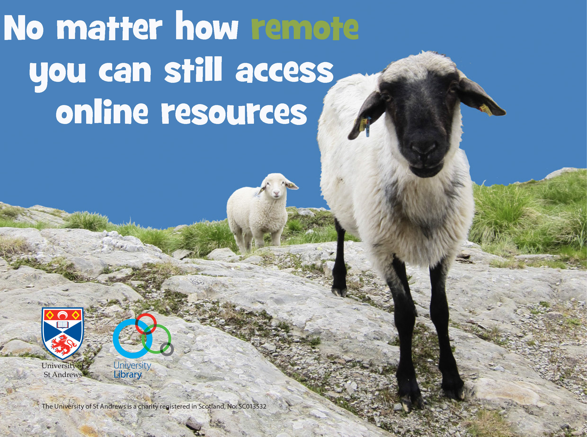 Picture of sheep - No matter how remote you can still access online resources