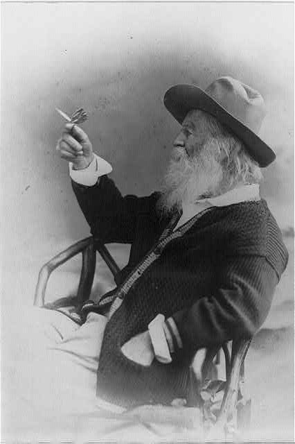 Walt Whitman, half-length portrait, seated, facing left, wearing hat and sweater, holding butterfly