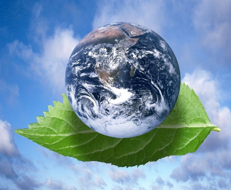 Earth & Leaf