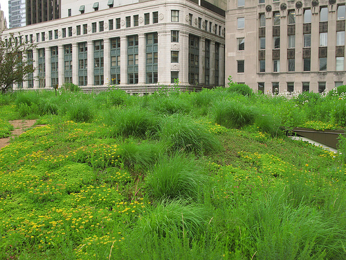 Green Roof at Chicago City Hall; photo courtesy of Flickr CC/Christopher Macsurak