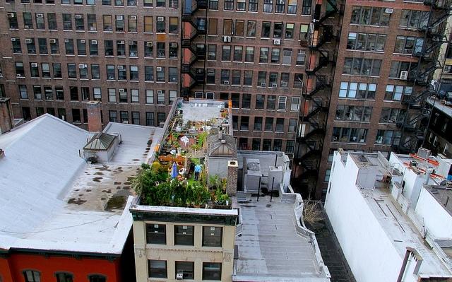 Rooftop Garden in New York City; photo courtesy of Flickr cc/Queena