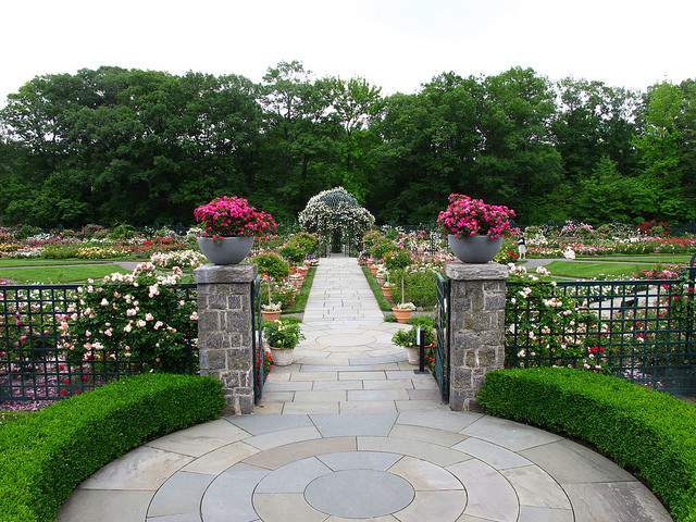 Peggy Rockefeller Rose Garden; photo courtesy of flickr cc/Kristine Paulus