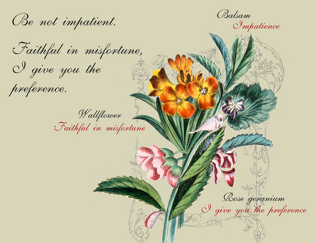A posy representing patience; Photo Courtesy of Flickr cc/Mann Library