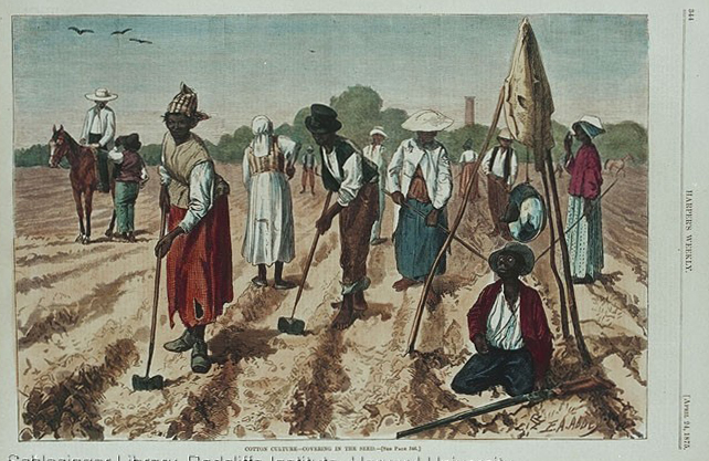 Men and women planting cotton seed. Clara Goldberg Schiffer Collection.
