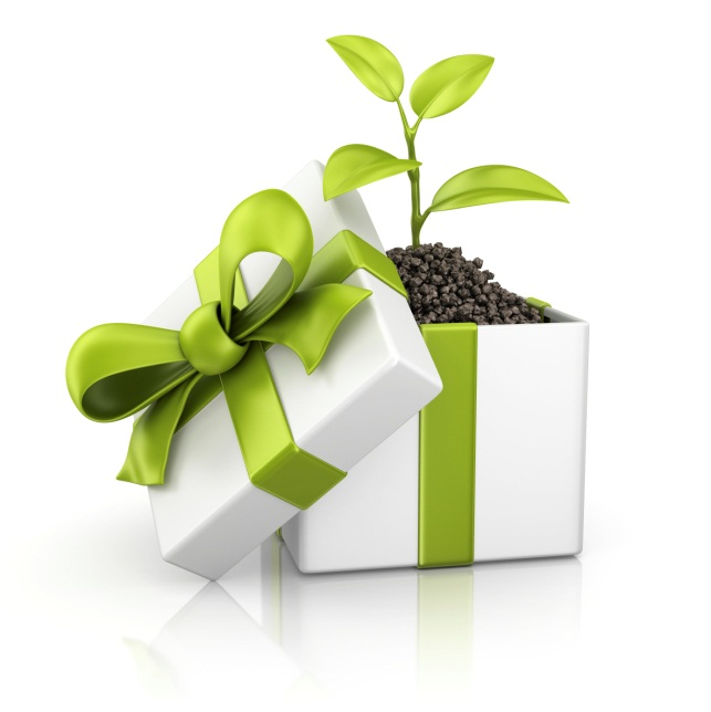 plant in box image