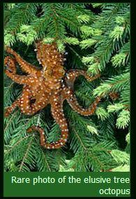 Tree Octopus