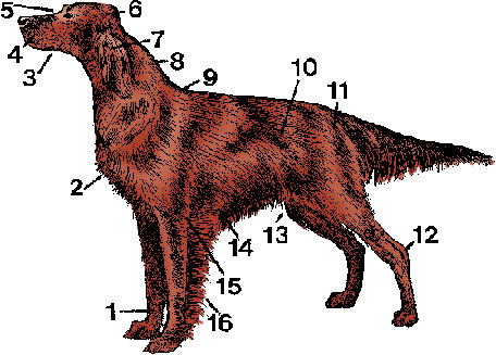 Dog Diagram