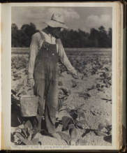 "Image from ""The Story of Tobacco by Bayard Wootten"" North Carolina Collection Photographic Archives"