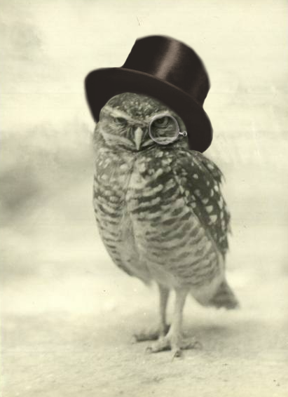 Owl in top hat