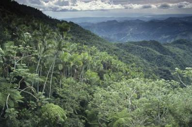 Photograph of the rainforest
