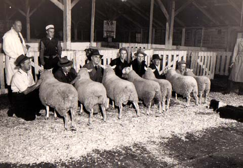 Ram Lambs, North Country Church, Winter Fair 1952