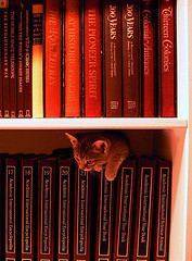 Annika's Education by Osmosis - from vlashton on flickr