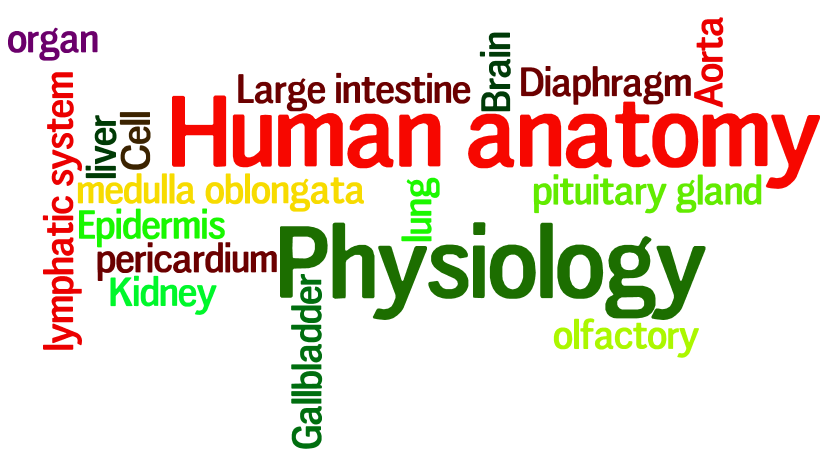 word collage of words related to human anatomy & physiology
