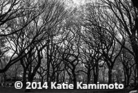 photo_Katie