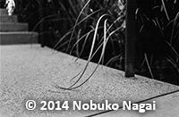 photo_Nobuko