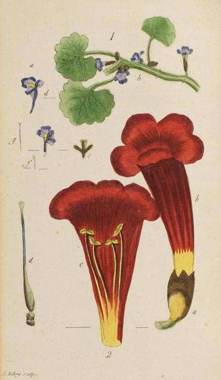 coloured engraving of plants