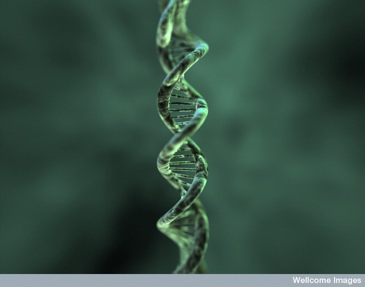DNA double helix illustration