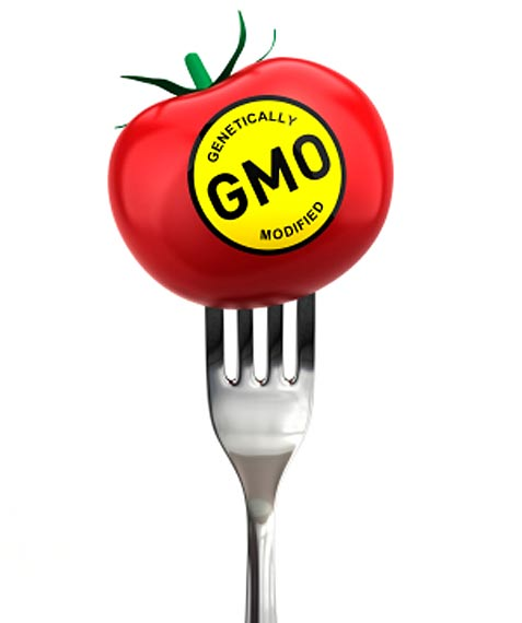 Illustration of Fork Piercing Tomato With Text: GMO