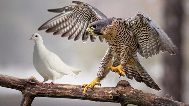 http://www.adweek.com/files/imagecache/node-detail/news_article/dove-hawk-hedb-2014.jpg