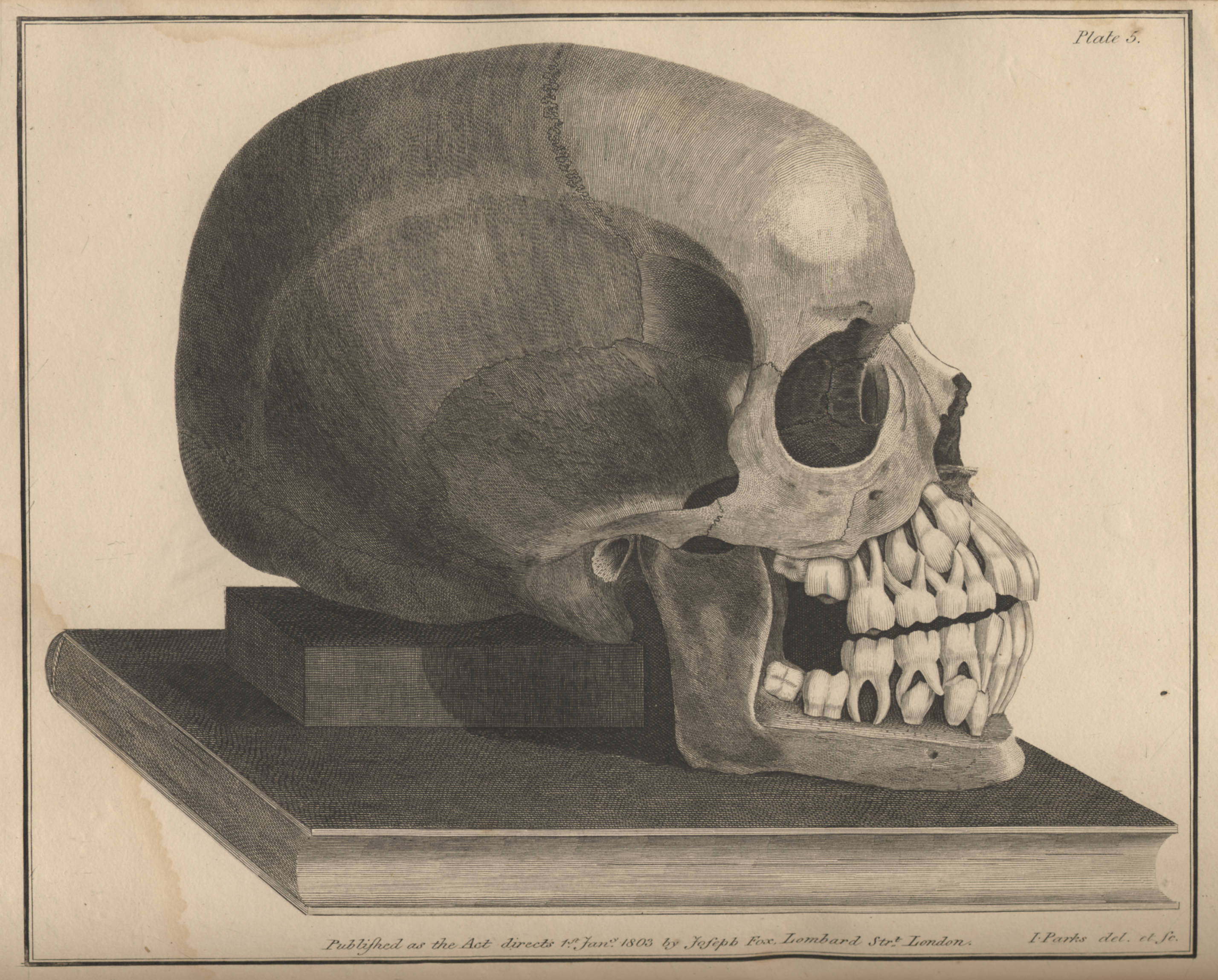 Engraved plate in Joseph Fox's The natural history and diseases of the human teeth.