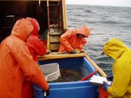 four people on a boat wearing rain gear and examining fish from a tank on deck.