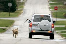 walking a dog when driving a car funny picture