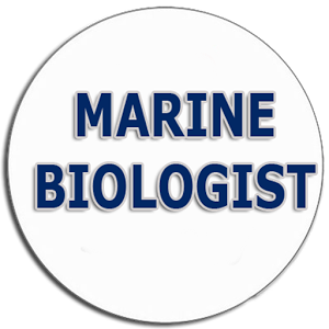 Marine Biologist - host Melody Young meets with marine biologist Andrea Cannon and joins her in her work to save the Kemp-Ridley sea turtle
