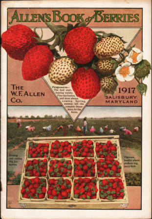 Strawberries on cover of 1917 Allen's Book of Berries from W.F. Allen Co. Salisbury, Maryland