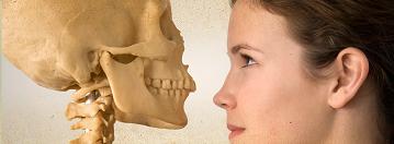 Skeleton, body, anatomy, physiology