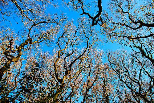 Forest sky Photo by Antony Chammond
