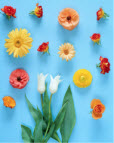 Flowers arranged in rows on a blue background