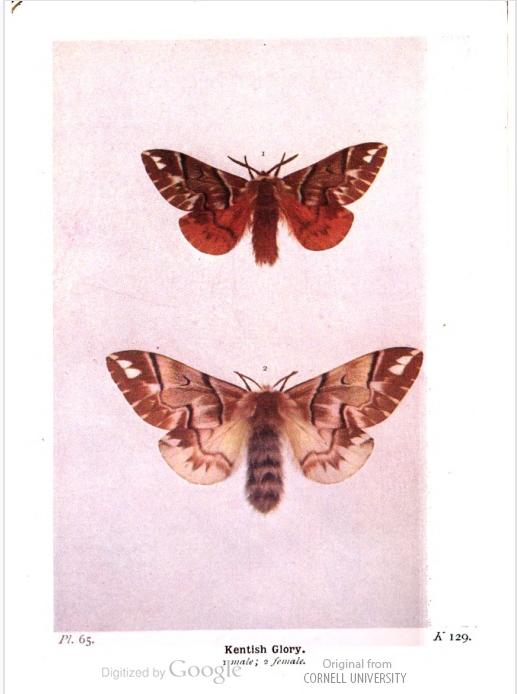 From: The moths of the British Isles, by Richard South