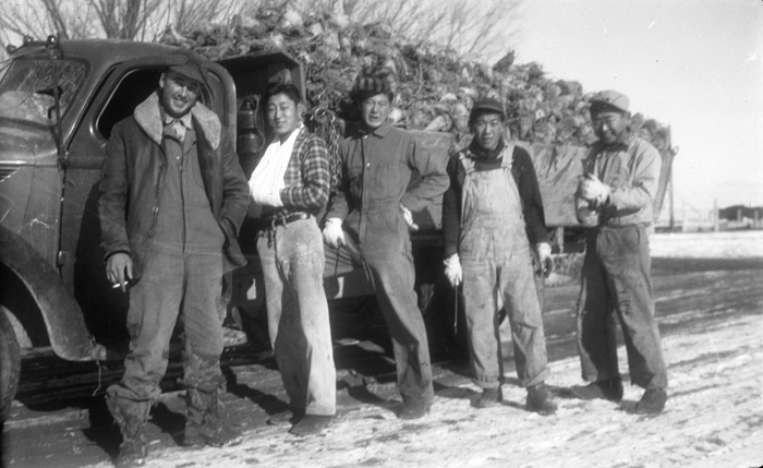 Tom Hide, Etsui Hiraishi, Harry Kuwahara, and Sho Shimizu working at the Heart Mountain Internment Camp.