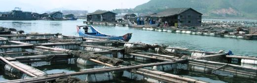 Image of a Fish Farm Floating Village in China.