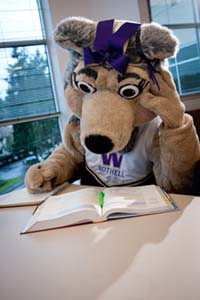 Holly Husky Studying