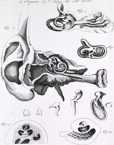 Old ear diagram