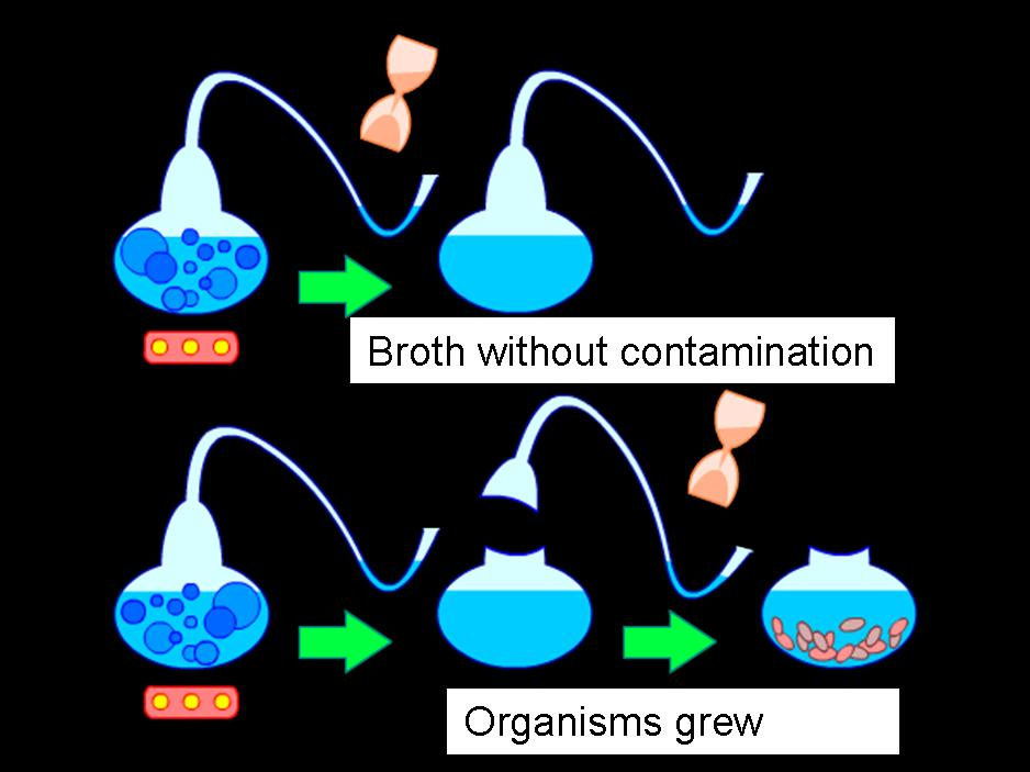 Experiment Pasteur English.jpg  Illustration of swan-necked flask experiment used by Louis Pasteur to test the hypothesis of spontaneous generation.