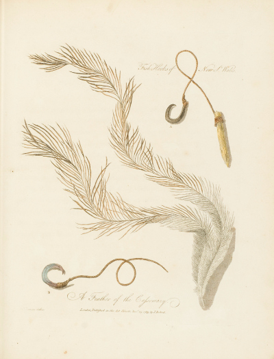 Digitised image of a coloured plate of a feather and fish hook