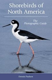 Field Guide to Shorebirds