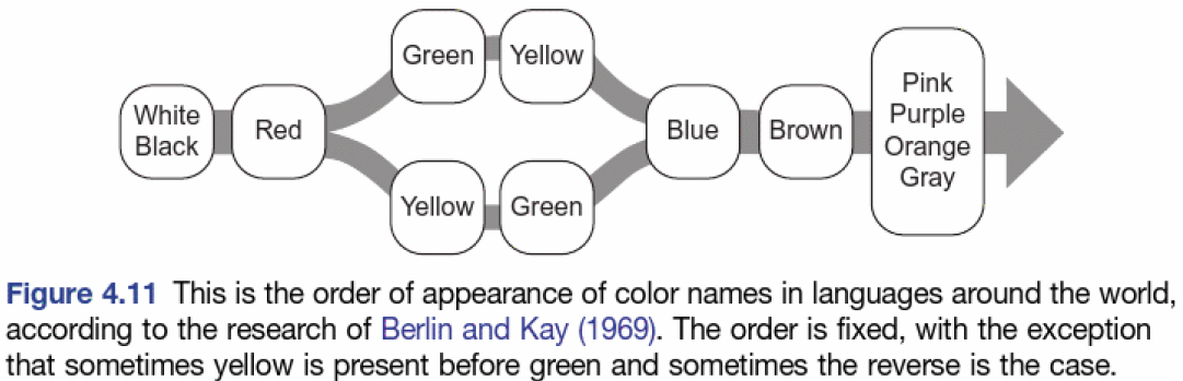 A diagram showing the order of appearance of color names across world languages: white and black, red, green and yellow, blue, brown, then pink, purple, orange and gray