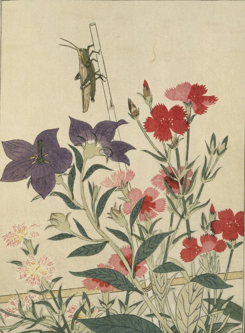 Rice locust with pinks and hibiscus
