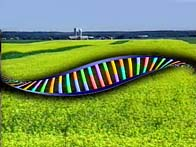 DNA strand superimposed on a farm field