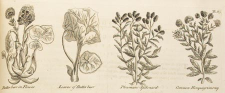 engraving of plants