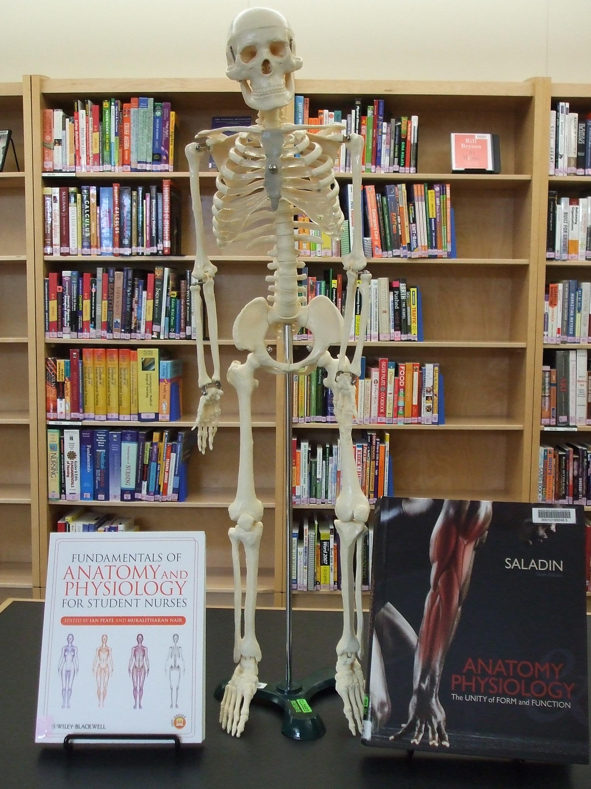 Model of skeleton in library